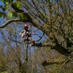Removing dangerous trees on the Isle of Wight