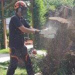 Affordable arborist service on the Isle of Wight