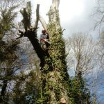 Tree removal on the Isle of Wight