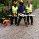 Tree surgeons on the Isle of Wight