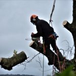 Tree cutting on the Isle of Wight