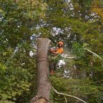 Tree surgery in Newport, Isle of Wight
