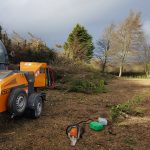 Professional tree surgery services on the Isle of Wight