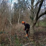 Tree removal on the IOW
