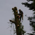 Affordable arborist service on the Isle of Wight Tree surgery on the Isle of Wight