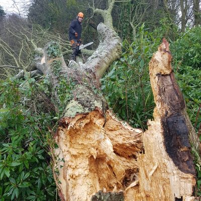 Isle of Wight Tree Surgery